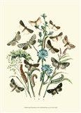 Garden Butterflies II