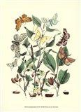 Garden Butterflies III