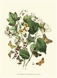 Garden Butterflies IV
