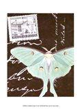 Le Papillon Script I