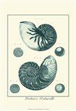 Shells in Aqua I