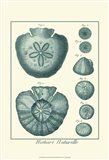 Shells in Aqua III