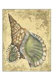 Sand and Shells I