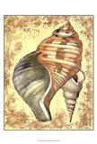 Sand and Shells II