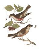 Antique Bird Pair I