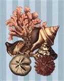 Shell and Coral on Aqua I