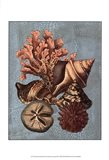 Crackled Shell and Coral Collection on Aqua I