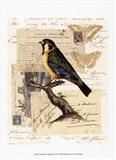 Naturalist's Collage III