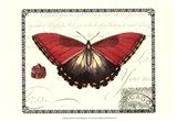 Butterfly Prose I