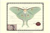 Butterfly Prose VI