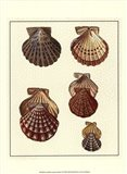 Crackled Antique Shells I