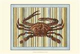 Seashore Crab