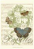 Papillon Melange I