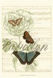 Papillon Melange II