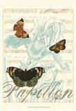 Papillon Melange III