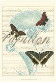 Papillon Melange IV