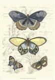 Butterfly Delight II