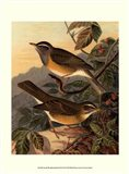 Small Woodland Birds III