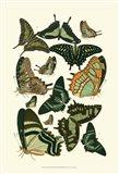 Green Butterfly Study