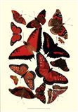 Red Butterfly Study