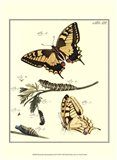 Butterfly Metamorphosis III