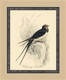 Printed Chimney Swallow (A)