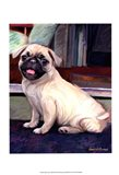 Baby Pug