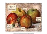 Fresco Fruit VIII