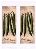 Fresco Veggies XIII
