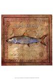 Ocean Fish IV