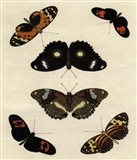 Butterfly Melage I