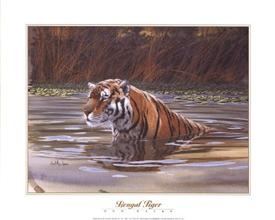 Bengal Tiger Poster by Don Balke for $18.75 CAD