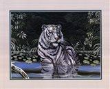 Wading White Tiger