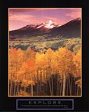 Explore Aspen Grove