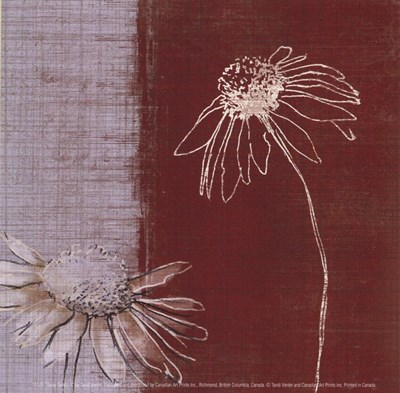 Daisy Sketch II Poster by Tandi Venter for $10.00 CAD