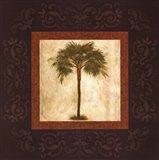 Mediterranean Palm