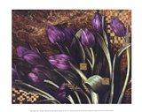 Regal Tulips