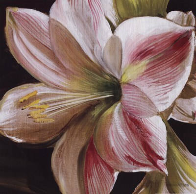 Pink Amaryllis Poster by June St Studios Pink Amaryllis for $21.25 CAD