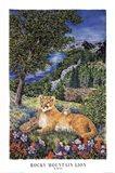 Colorado Mountain Lion