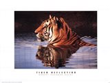 Tiger Reflection
