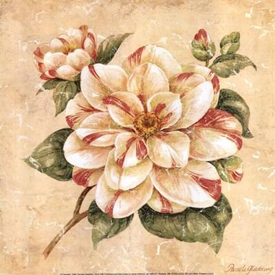 Camellia Poster by Pamela Gladding for $13.75 CAD