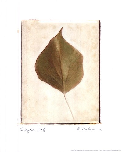 Single Leaf Poster by Amy Melious for $10.00 CAD