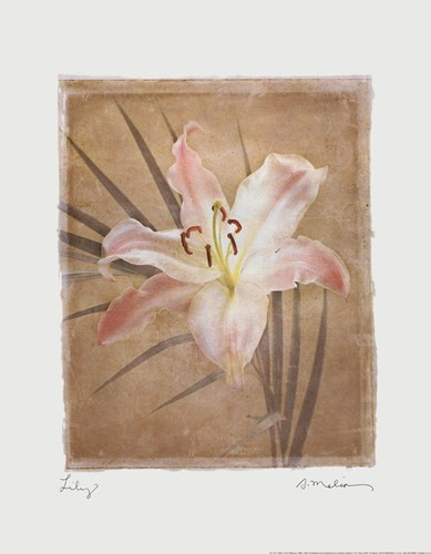 Lily Poster by Amy Melious for $13.75 CAD