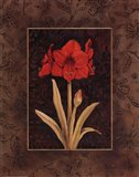 Damask Amaryllis - Mini