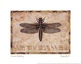 Dragonfly IV