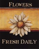 Flowers Fresh Daily - Mini