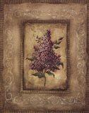 Savin Lilac