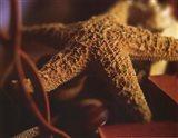 Starfish IV