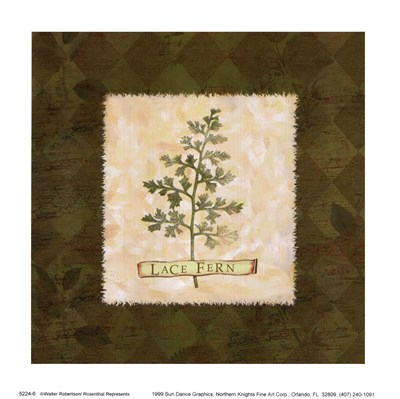 Lace Fern Poster by Walter Robertson for $10.00 CAD