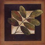 Leaves Over Brown II